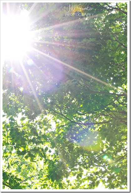 sunflare-4431