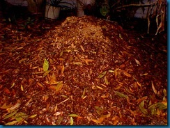 fertilizer - palm