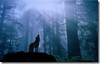 Dangerous-Fox-fox-night-fog-forest-rocks-trees-shdows-1920x1080