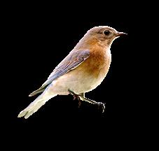 damayanti_unbeleafable_freebie_bird