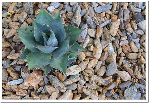 140515_desert_garden_bed_rocks_003