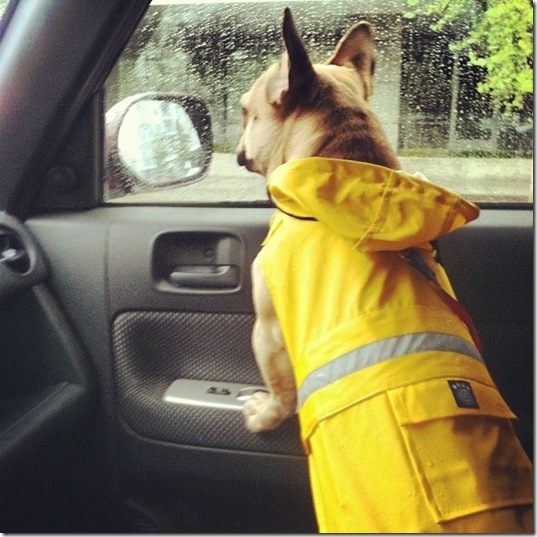 hurricane-sandy-dogs-8