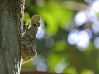 Amazing Pictures of Animals, photo, Nature, exotic, funny, incredibel, Zoo,,Peanut Bug Fulgora laternaria, Alex (17)