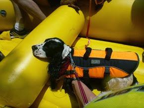 Pets Adventure 17 (103_1) (25)