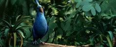 34 l'oiseau 2