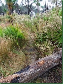 Pat's Island Trail 054