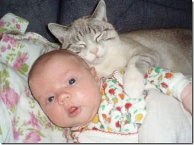 bayi dgn kucing