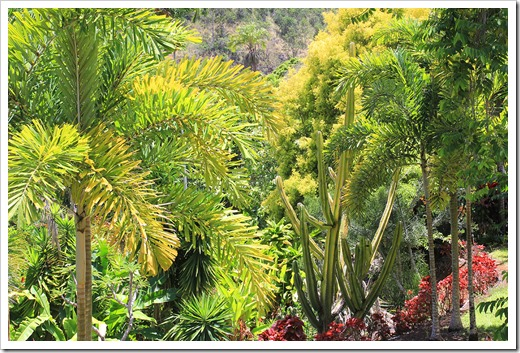 130713_TropicalGardensOfMaui_054
