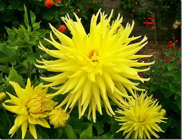 flowersD