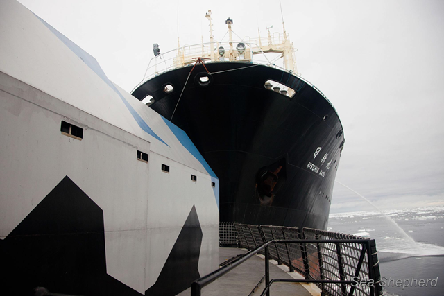 The Japan whale poachers' factory ship, the Nisshin Maru, rams the stern of the Sea Shepherd ship, the Steve Irwin, 20 February 2013. Photo: Sea Shepherd Conservation Society