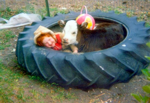 Amber in tire with calf