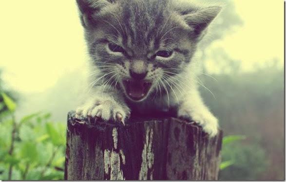 funny-animals-cute-25
