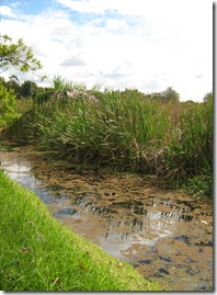 Humedal Santa María zona de reserva