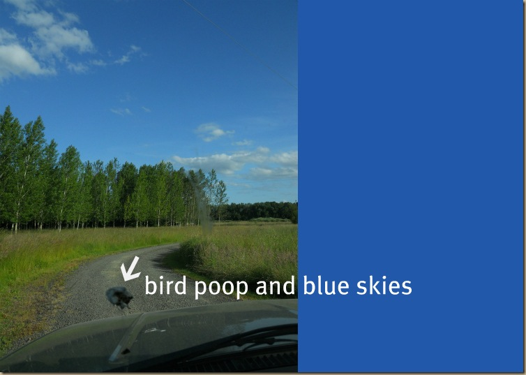 bird poop and blue skies