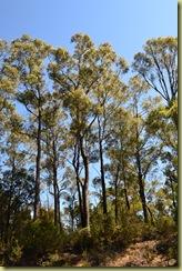 Bush Trees