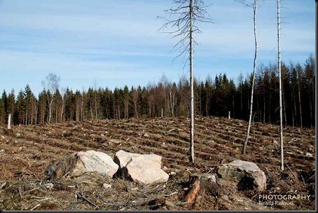 tree_20120408_gone