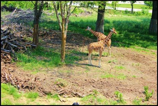 Zoo4 297