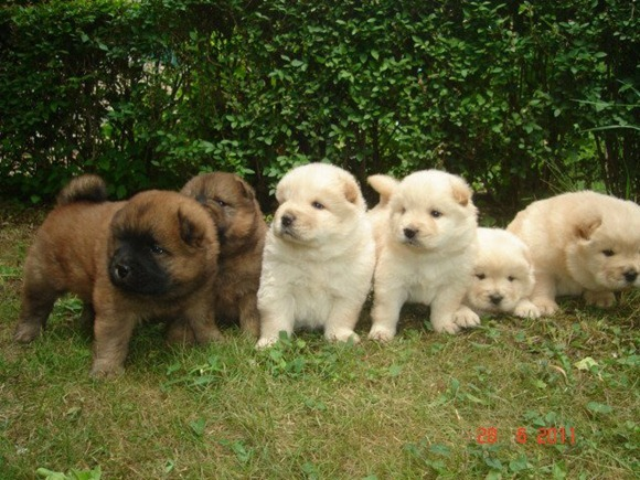 Cutest puppies ever 01