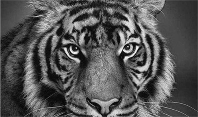 10 increíbles dibujos hiper realistas hechos con lápiz