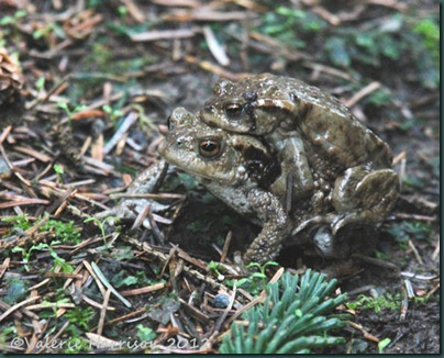 10-toads