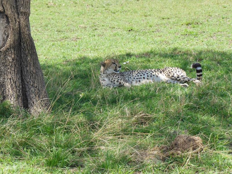 safari dag 1 064