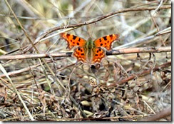RSPB Sandwell Valley - Early spring