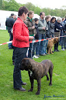 20100513-Bullmastiff-Clubmatch_31173.jpg