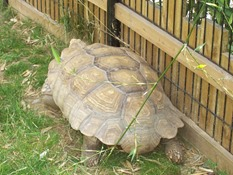 2013.08.04-026 tortue