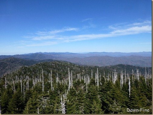 Clingmans dome_033