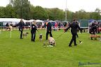20100513-Bullmastiff-Clubmatch_30950.jpg