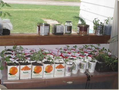 potting plants 066