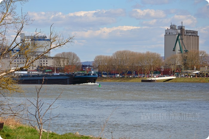 Ostersonntaghunderunde (16) am Rhein