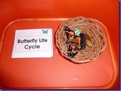 butterflies 006