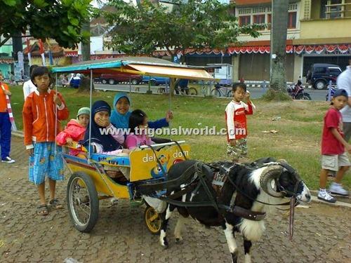 Delma Domba Alun-alun Ciamis_www.trigonalworld.com