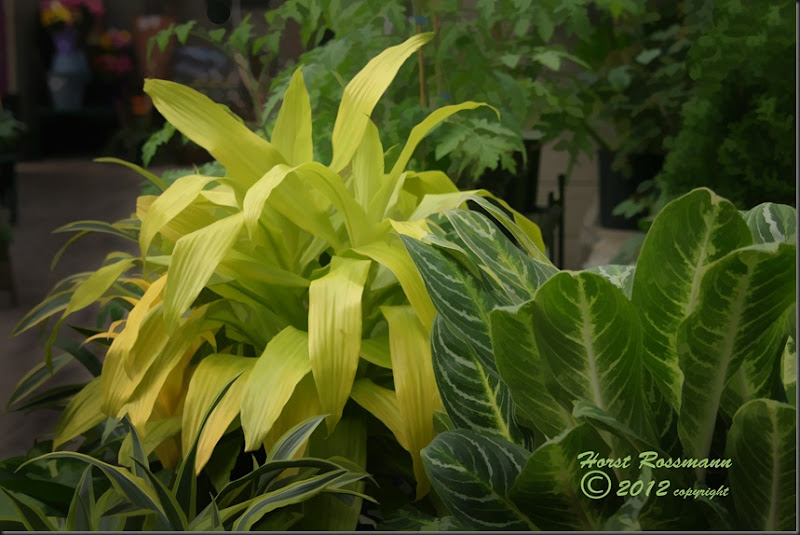 Tropicals with Hostas copy
