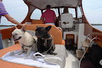 Frenchies on the High Seas