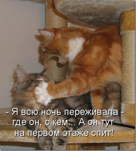 kotomatritsa_oJ