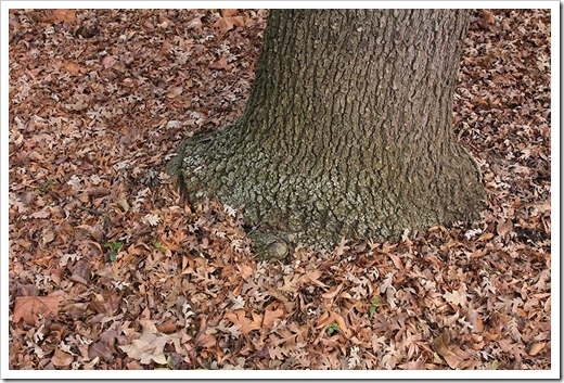 120102_brown_tree_trunk