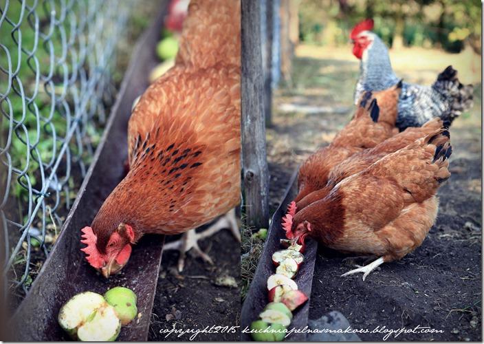 Ptaki mojej mamy5