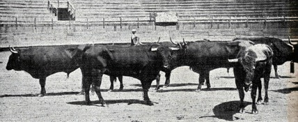 1902-12-21 (p. 1903-01-29 SyS) Toros de Carreros en Mexico 001
