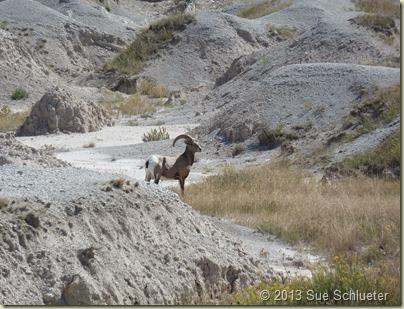 2013 Sep 14_Badlands NP and Wall Drug_1004