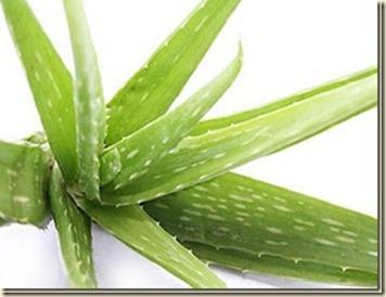 Remedios Caseros para el cabello con Aloe Vera2