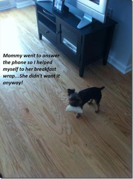 dog-shaming-bad-5