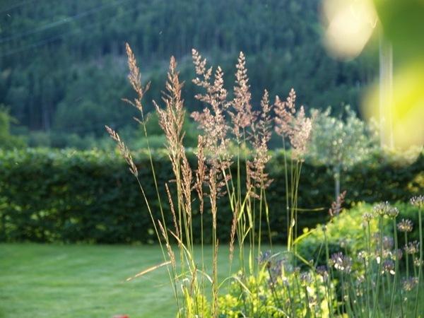 2011-07-13 Hagen på Møll (53)