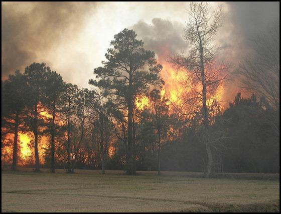 wildfire (8-4-12)