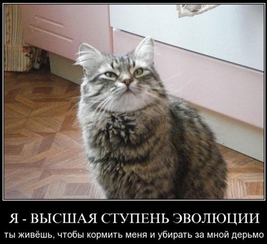 s3img_4987759_32552_1