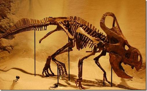fosilesdinosaurios03