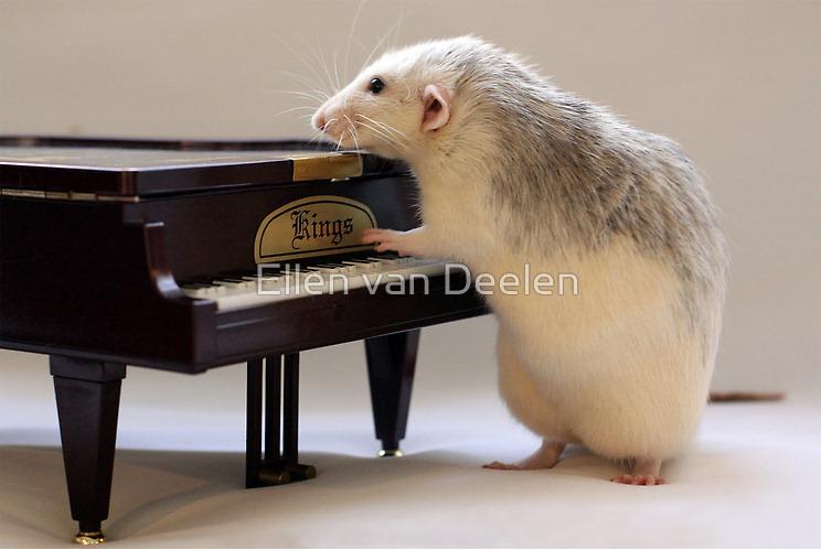 rat-musicians-003