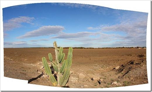 111117_lone_cactus_pano