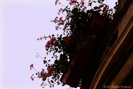 blom_20111011_2